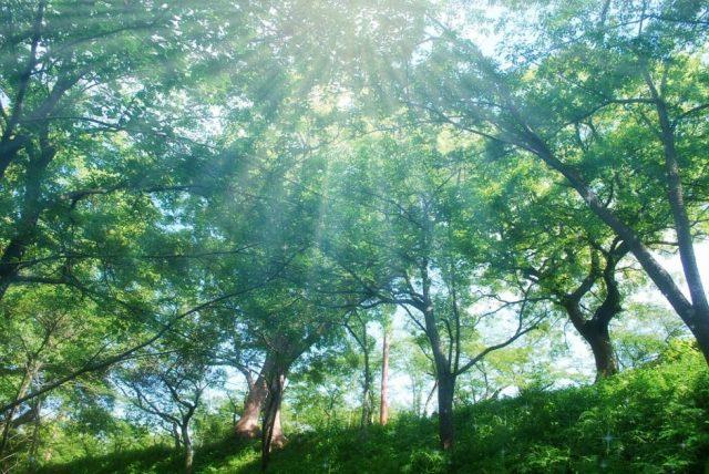 癒やしの森